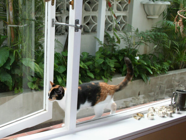 cat flap alternative - easy pet access