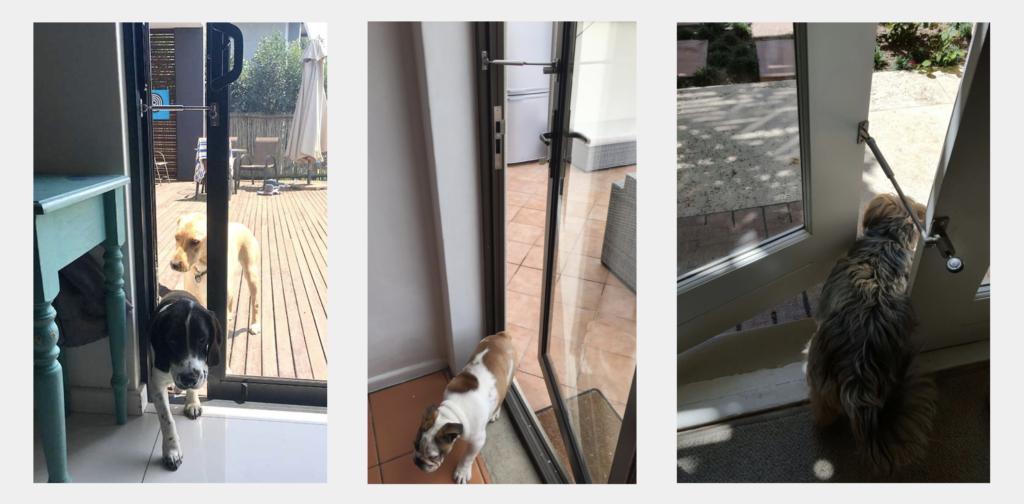 dog door alternative